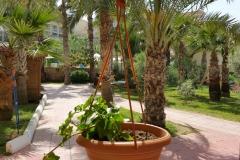 oscarresort-garden-13